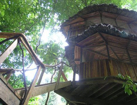 Forest organic tree house