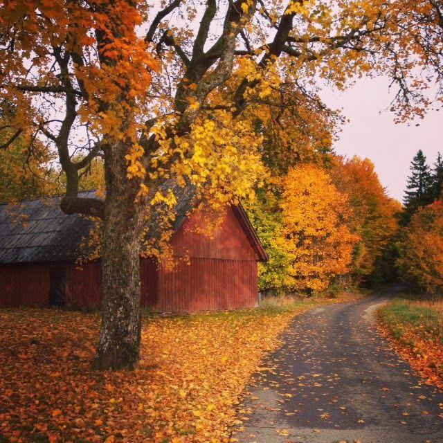 LILJOR OCH TULPANER: Att sätta ord på hösten...