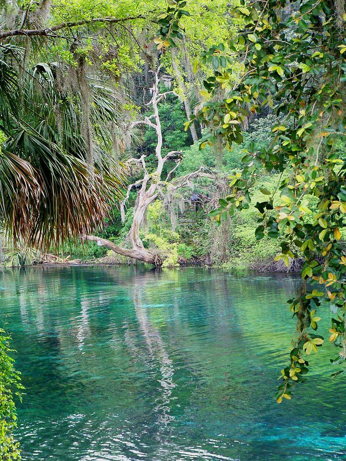 Rainbow River Dunellon Fl