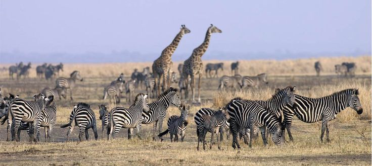 Explore such a land of extraordinary beauty by booking for #TanzaniaSafari. Know more @ https://www.northernmasailandsafaris.com/
