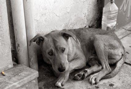 GALIMATÍAS LITERARIAS DE PÉSIMA ORTOGRAFÍA: Pintura de un perro callejero en tiempos actuales