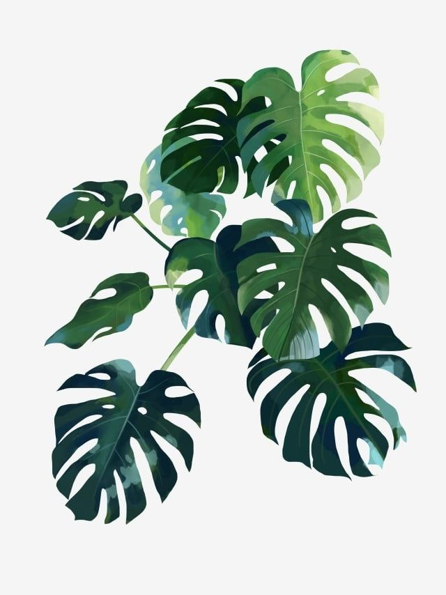Nordic Present Decoration Green Plant Plant Clipart Monstera Leaf Png Transparent Clipart Image And Psd File For Free Download Plant Art Plant Wallpaper Plant Illustration