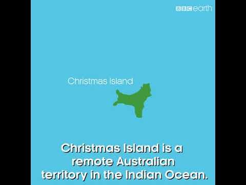 BBC #Our Blue Planet Green Turtle on Christmas Island - YouTube
