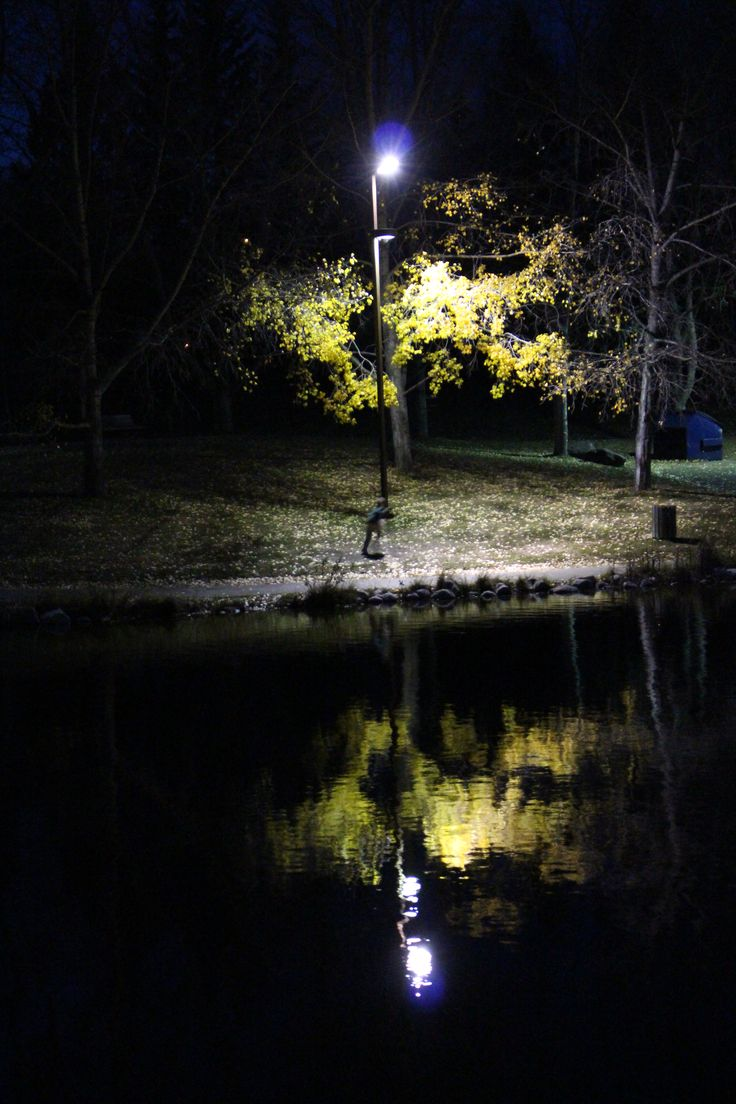 Nighttime Reflections