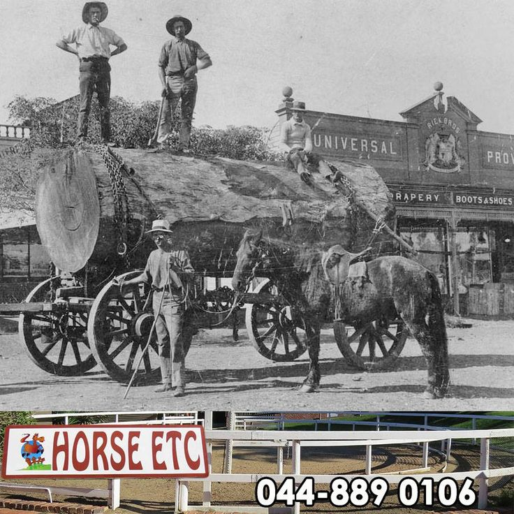 This throwback Thursday we have found a very interesting part of history that we would like to share with you, did you know that no horses existed in Australia until settlers brought them during the eighteenth century? No early horse fossils have ever been found in Australia. #throwbackthursday #horsefacts #lifestyle