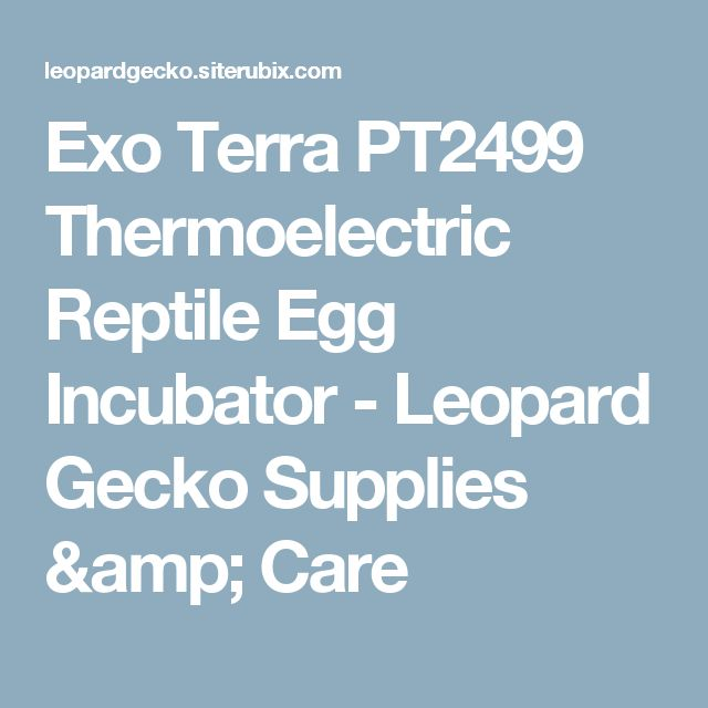 Exo Terra PT2499 Thermoelectric Reptile Egg Incubator - Leopard Gecko Supplies & Care