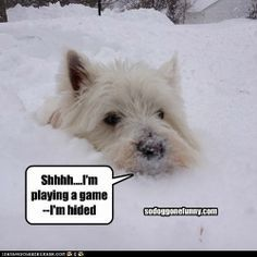 My dog does this in the snow! He also does it in bushes, dont think he realises his white not green!
