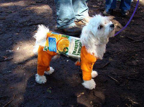 17 Best ideas about Funny Dog Costumes on Pinterest ...