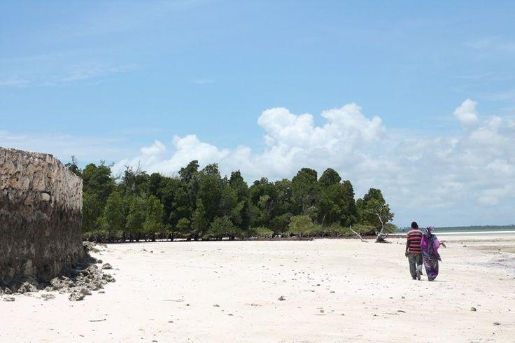 Spaziergang durch die Mangroven von Sansibar – Michamvi Kae