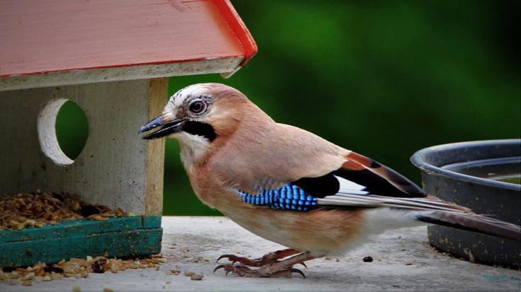 Futtersaule Futtersilo Fur Vogel Aufstellen Pflege Was Beachten Grosser Vogel Wildvogel Vogelfutterstation