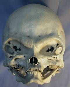 This skull which is clearly not human was found at a yard sale in Canada.