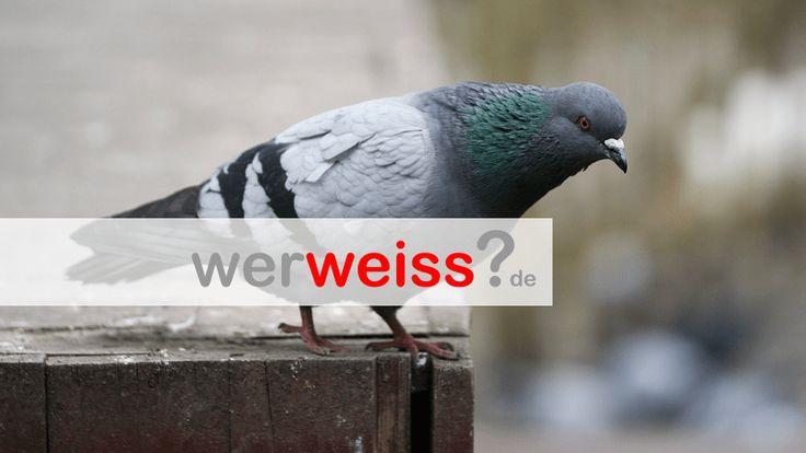 Tauben Sprüche