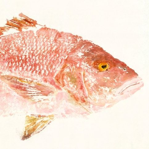 """Red Snapper - """"Rosy"""" - Gyotaku Fish Rubbing - Limited Edition Print (32 x 15.5), for my husband, hanging in our living room."""