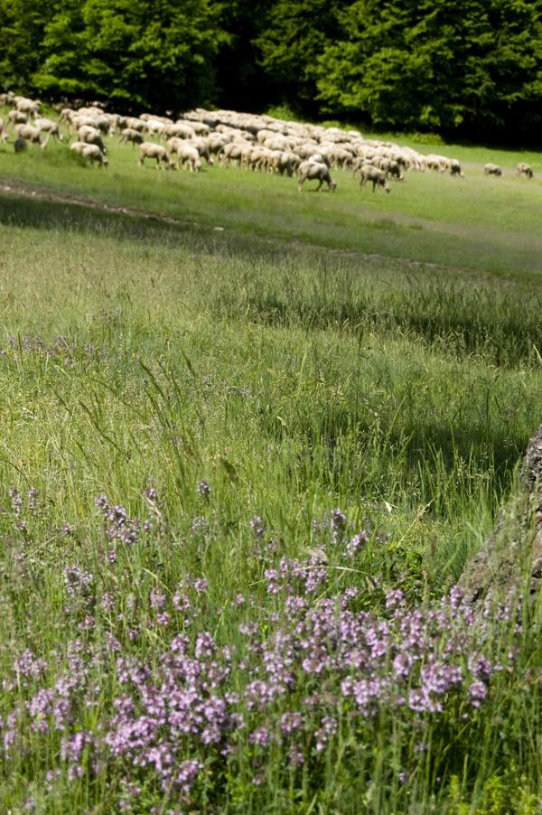 Hungary, Nature and sheeps