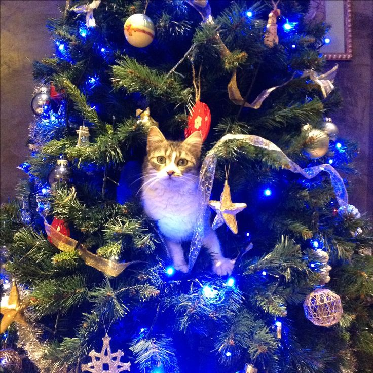 Addobbi sull'albero!