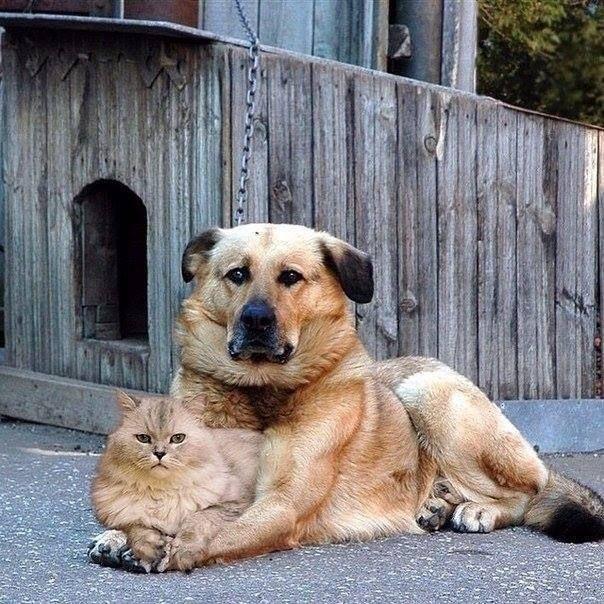 ДРУЖБА................ Обичам животните www.facebook.com