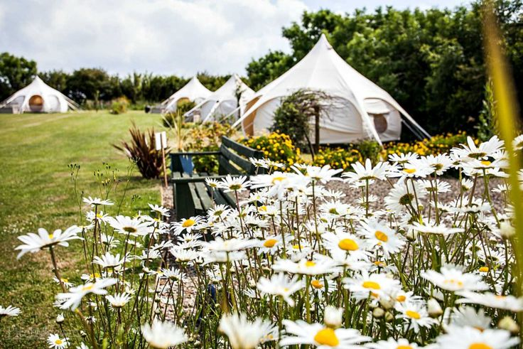 April showers bring spring flowers and gorgeous glamping at Lowarth Glamping, Wadebridge, Cornwall - Pitchup.com