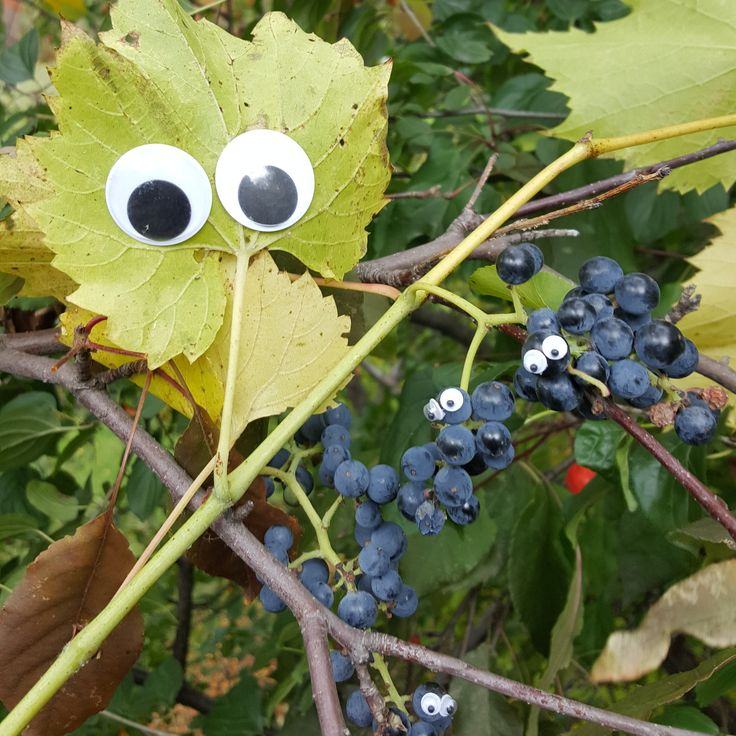 every time I pass wild grapes while out for a walk: If you're all alone when the pretty birds have flown Honey I'm still free take a chance on me Gonna do my very best and it ain't no lie If you put me to the test, if you let me try Take a chance on me. -ABBA