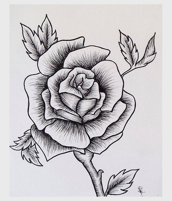rose drawing sketch easy roses