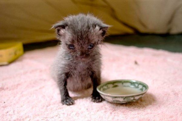 Tiny Kitten Found Crawling On Road During Rainstorm Is Barely