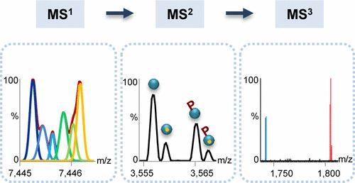 #AChem: Triple-Stage Mass Spectrometry Unravels the Heterogeneity of an Endogenous Protein Complex #MassSpec