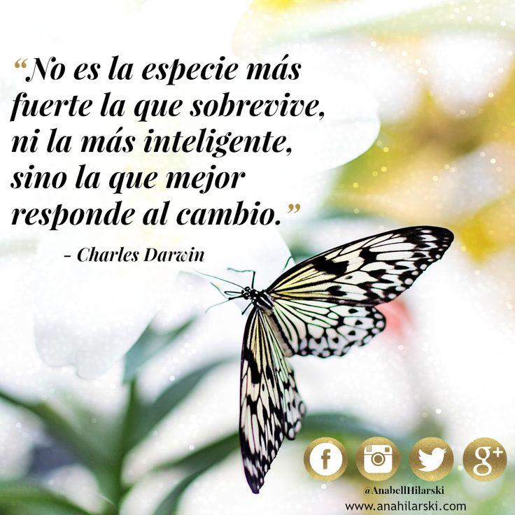 No es la especie mas fuerte...... #frases #negocios #quotes #emprendedores http://anahilarski.com/que-puedo-hacer-por-ti/