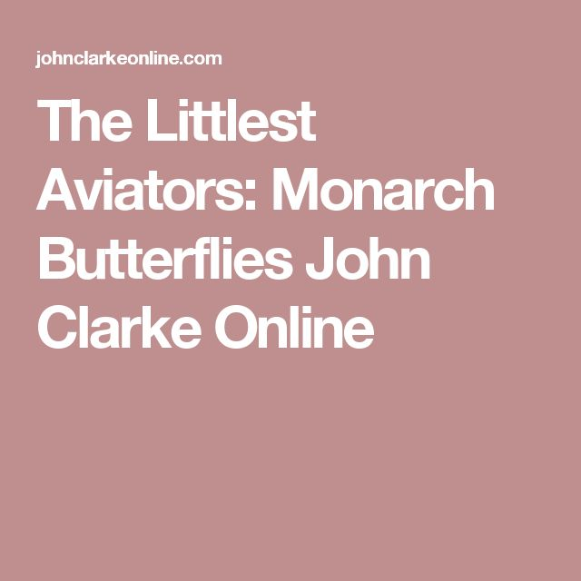The Littlest Aviators: Monarch Butterflies  John Clarke Online