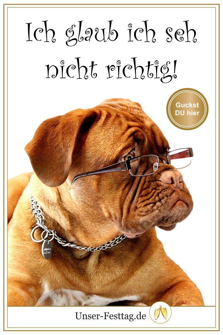 Lustige Geburtstagseinladungen Mit Hund Und Anderen Witzigen