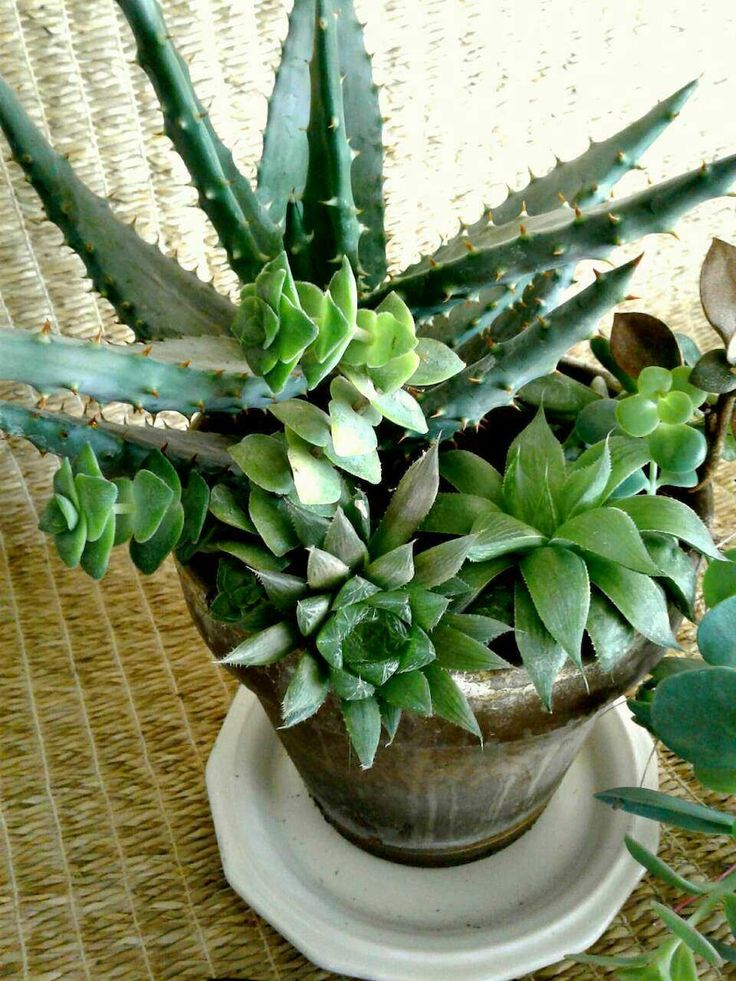 Succulents in a chocolate terracotta planter from a small online plant nursery in Phoenix, AZ. Local meetup by appointment, or delivery may be possible for sizable orders.