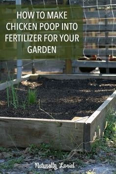 How to make chicken poop into fertilizer for your garden - When to fertilize vegetable garden ...