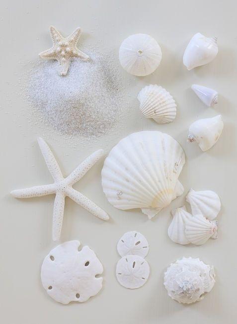 White Shells