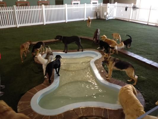 1000 images about dog boarding kennels on pinterest for for Piscinas para perros baratas