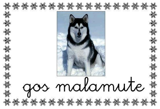 Perros esquimales  han de ser fuertes, robustos y de un gran pelaje.Tres razas: 1º Husky siberiano.2º Samoyedo.3º Malamute (muy parecido al husky). Los perros son llamados qimmiq en inuit. Cuando hace mucho frío se enroscan sobre sí mismo formando una bola y se tapan las patas y el hocico con la cola para mantenerlos calientes. Así pueden dormir aire libre y bajo una capa de nieve. Con la llegada del verano, se van derritiendo el hielo formando agujas cortantes, ...........