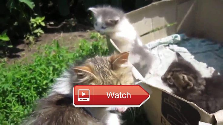 😸 Cute Funny Cats Videos Compilation Most See Crazy Funny Cat Videos Ever Forget Your Sadness 😼 Top FUNNY animals Compilation Funny Cats…