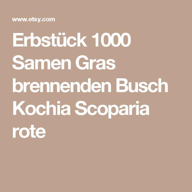 Cute Erbst ck Samen Gras brennenden Busch Kochia Scoparia rote Blume Pflanze Garten Bulk exotische