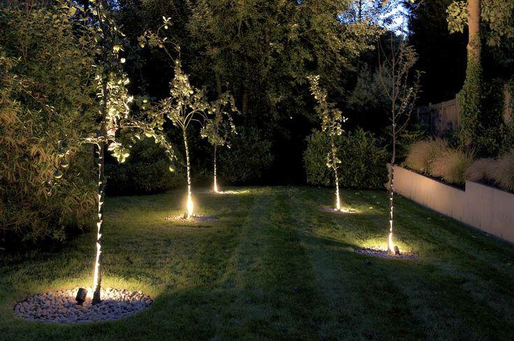 Uplights in a garden design in Crystal Palace, London, by Kate Eyre Garden Design #KEGD