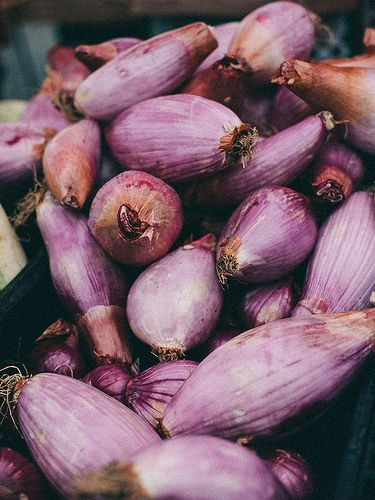 Shallots by Julie Marie Craig