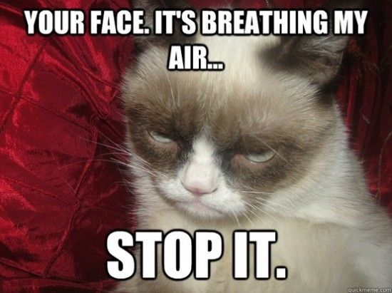 17 Most Funny Grumpy Cat Memes of All Time