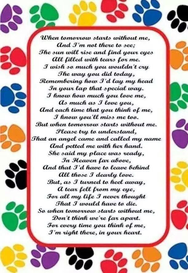 Pin by Heather Landry on Saying Goodbye to a Furbaby Pet