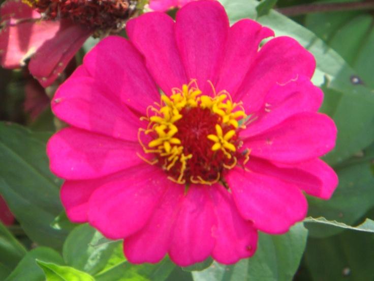 Colombian Flower