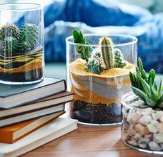 Terrarium de table, jardins de sable et de gravier avec cactus et plantes grasses.