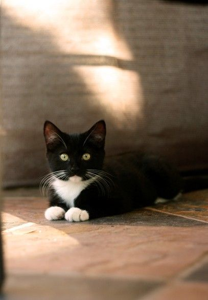 Whitechin a clan cat that abandoned the clans in search of the tribe. He is now a member