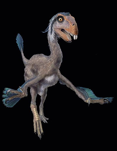 Incisivosaurus – with bizarre front teeth, a bit like a rabbit. A herbivorous theropod from the early Cretaceous. ~ Illustration by Portia Sloan