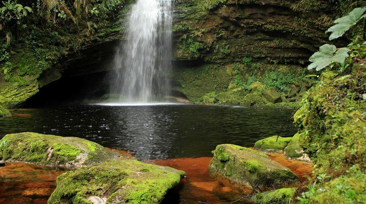 Parque Nacional Natural Cueva de los Guácharos | Parques Nacionales Naturales de Colombia