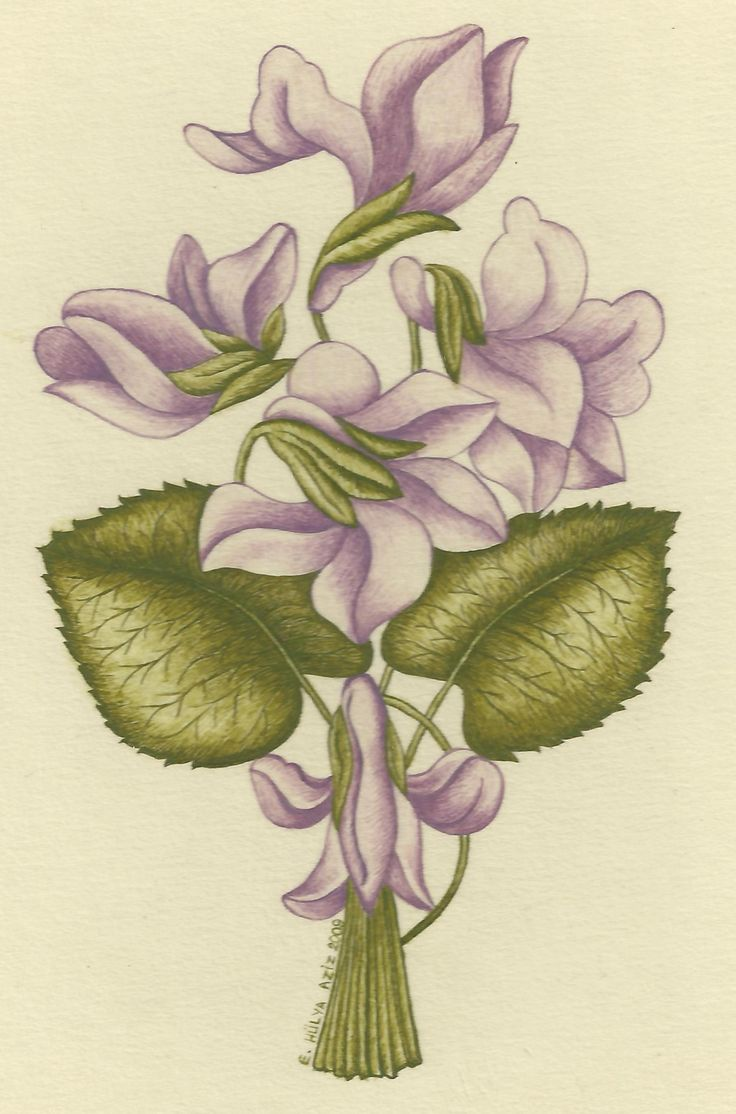 Hülya Aziz-Menekşe/Şükufe, 2009. #hulyaaziz #violet #flower #illumination #art #miniature