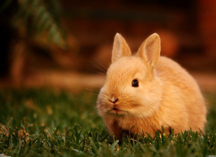 Pin By Dianne Bohac On Bunnies Cute Baby Bunnies Rabbit