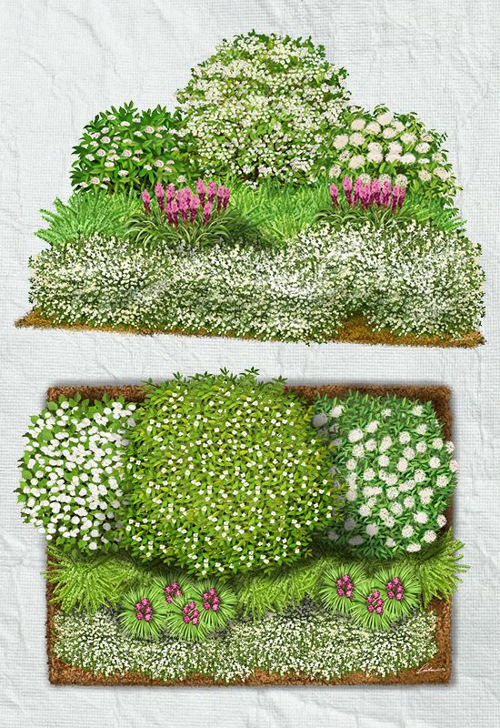 Blühsträucher Eleganz mit weißen Blühsträuchern steht bei diesem Beet im Vordergrund. Die Kombination von Sträuchern und Zwerggehölzen eignet sich vor allem für Grundstücksgrenzen und das stilvolle Abpflanzen eines Hintergrundes. Die weißen Sträucher bestechen durch ihre Schnittverträglichkeit, Blütenreichtum, Pflegearmut und sind sehr resistent gegen Krankheiten.