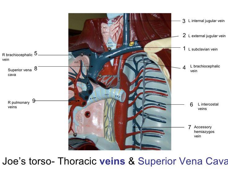 29 best mediastinum images on Pinterest   Medizin ...