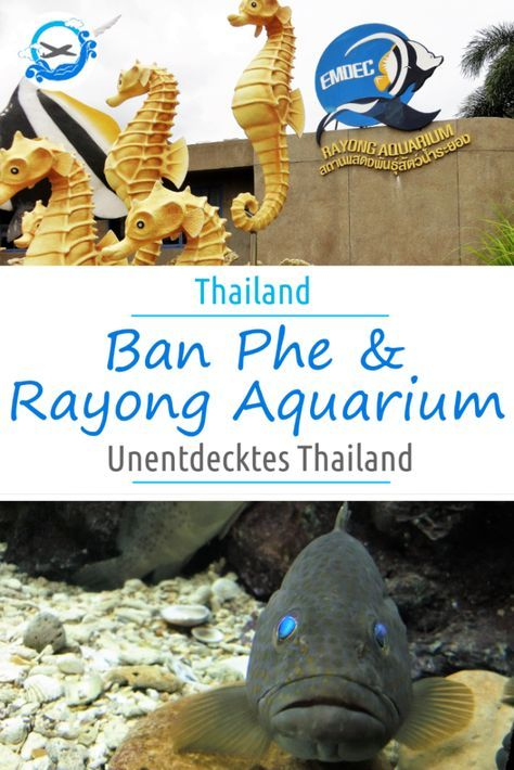 Ban Phe am Golf von Thailand ist eine untouristerische Ecke im Land des Lächelns. Für Familien mit Kindern ist dieses Reiseziel sehr interessant, da es dort das Rayong Aquarium mit vielen Fischen gibt. Besonders im Urlaub mit Kindern und Beim Reisen mit Kindern ist dies ein tolles Ziel.