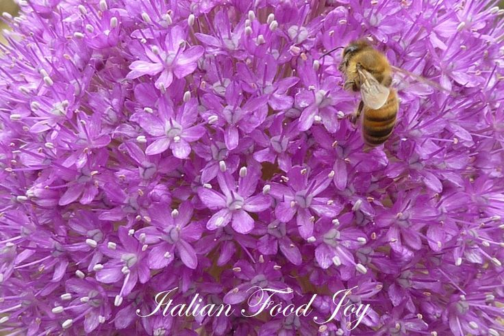 #bee live eating #healthy #food www.italianfoodjo... for UK and other countries www.italianfoodjo... for DE and AT only